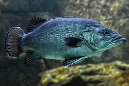 Bir balık