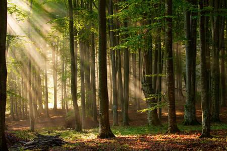 Φθινοπωρινό δάσος