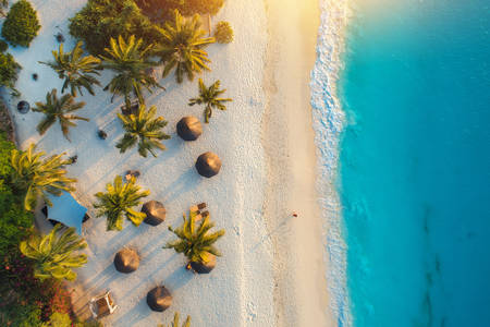 Palm kust