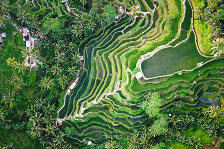 Rice Terrace Patterns