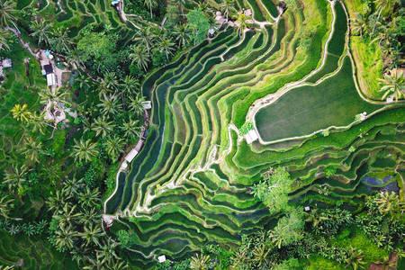 Wzory tarasów ryżowych