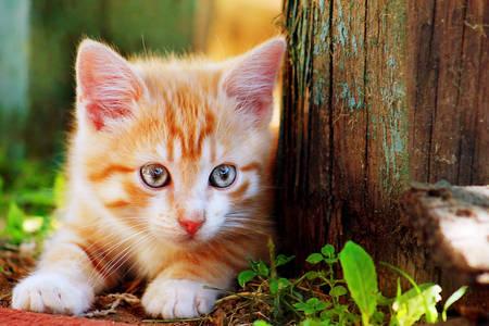 Gyömbér cica a fa mellett