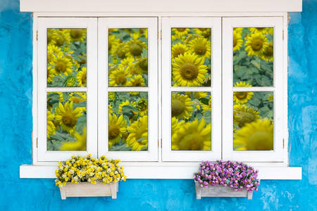 Window overlooking the sunflowers