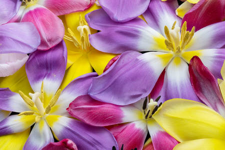 Colorful petals