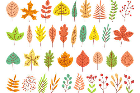 Leaves of different trees