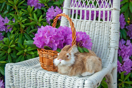 Rabbit on a wicker chair in the garden
