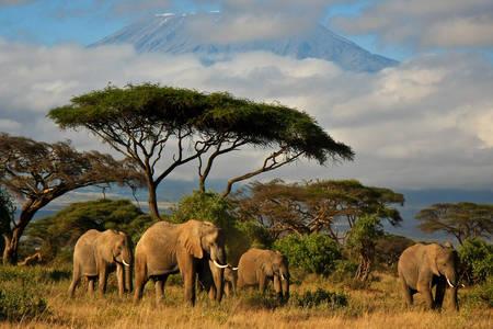 Elefántcsalád