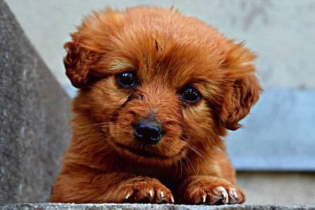 Malé šteniatko