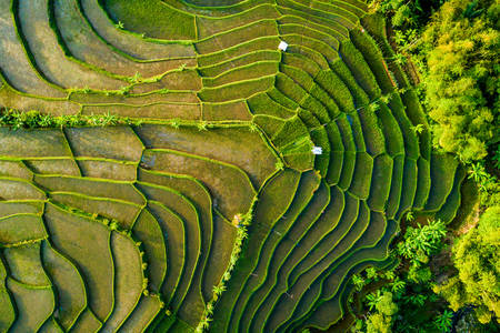 Top view of the rice field terrace