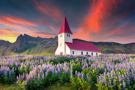 Small church surrounded by flowers