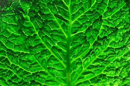 Текстура листа савойской капусты