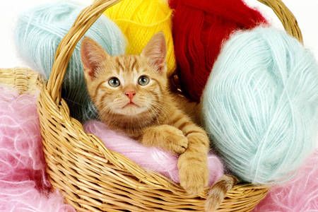 Kitten with threads