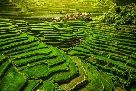 Rice terraces on the slopes of the Cordilleras