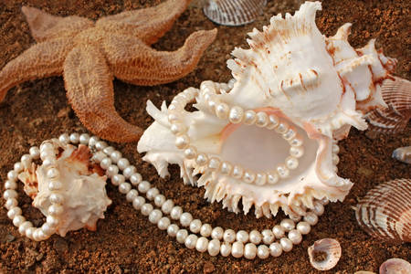 Pearl necklace on a shell