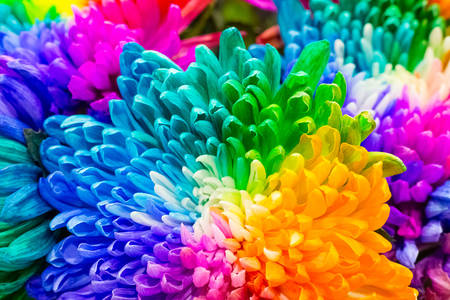 Fleurs arc-en-ciel