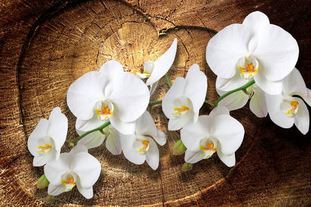 Білі орхідеї на дерев'яному тлі