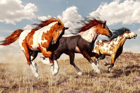 Strakaté koně běžící přes pole