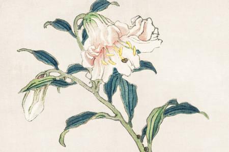 "Kōno Bairei: ""Lily"""