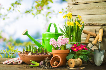Flores e ferramentas de jardim