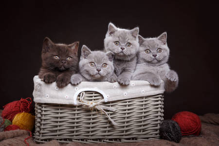 Britanske mace