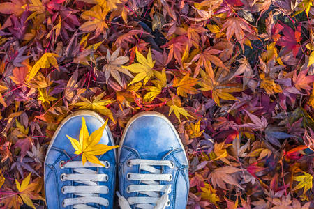 Sneakers on yellowed leaves