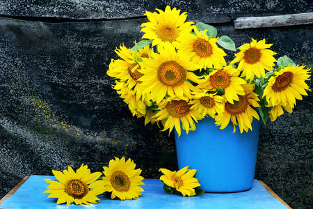 Bouquet of sunflowers in a bucket