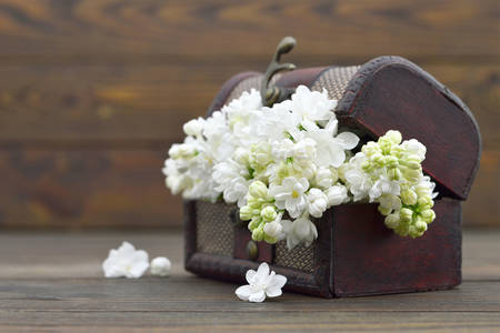 White lilac in a wooden chest
