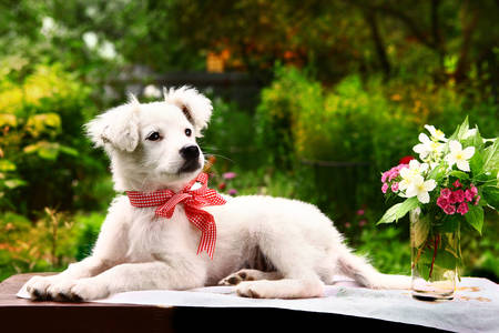 White puppy in the summer garden