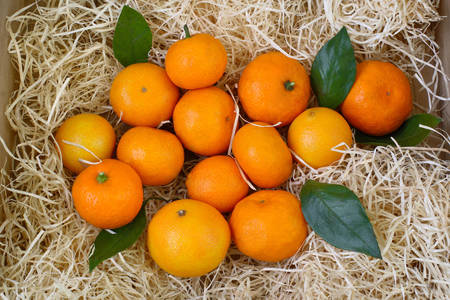 Tangerines in a box of straw