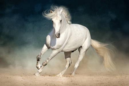 Wit paard op een donkere achtergrond