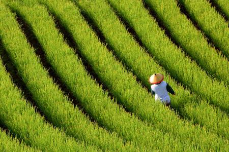 Farmár v teréne