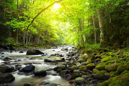 Rivière de montagne dans la forêt