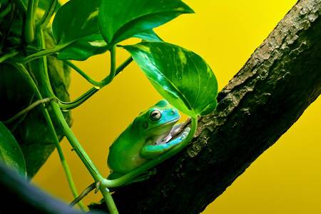 Frog on the tree