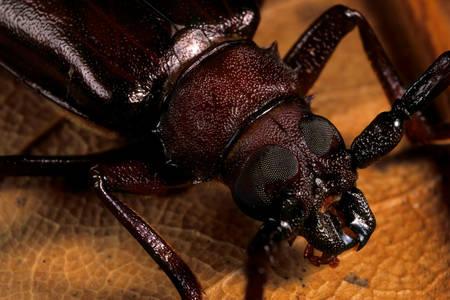 Макро фото жука