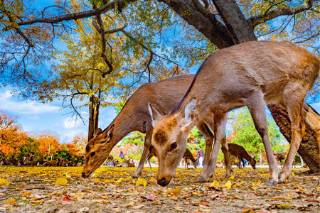Jeleň v parku