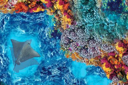 Stingray egy korallzátonyon