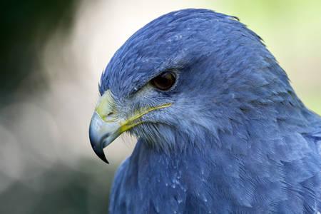 Bird Aguya