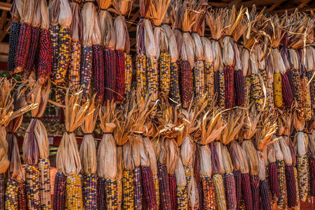 Dried Colored Corn
