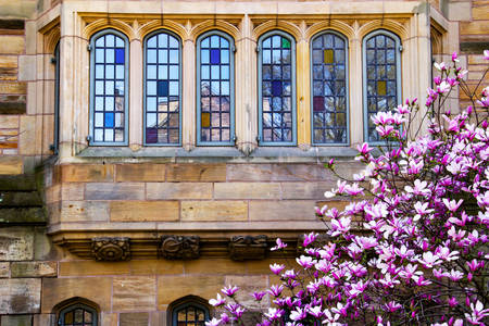 Victorian windows of Yale University