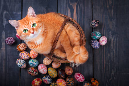 Cat in a basket and Easter eggs