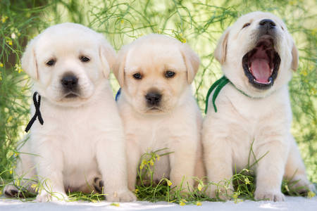 Tri štenad