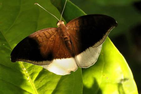 Počet šedých motýlů