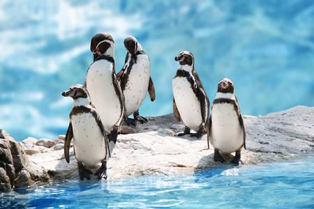 Pingvini na ledu