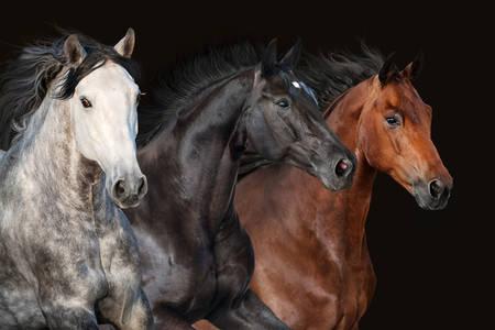 Horses on a dark background