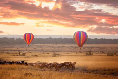 Ballonnen in Masai Mara