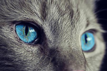 βλέμμα της γάτας