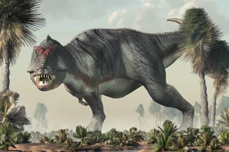 Gray tyrannosaurus