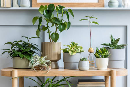 Houseplants on a wooden table