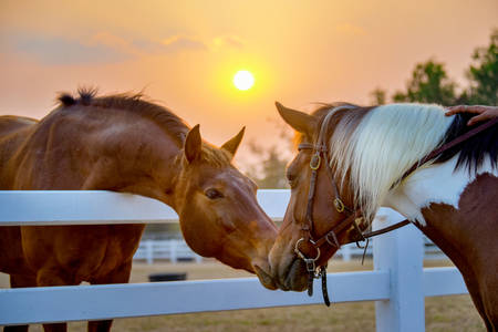 Horses on the background of the sunset