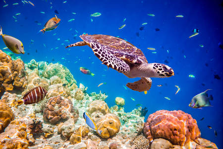 Maldivi pod vodom